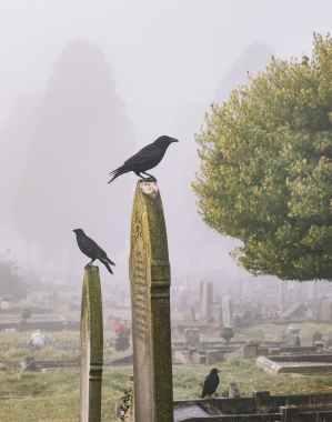 black birds on tomb stones